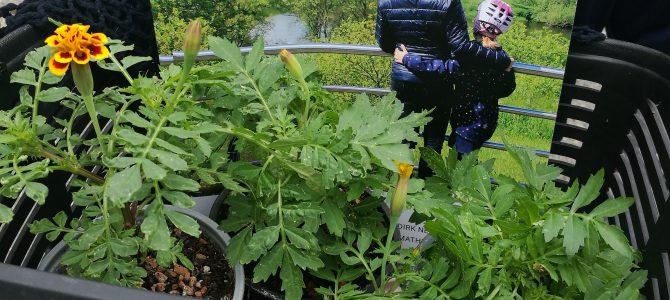 Pflanzen-Tausch-und Verschenk-Aktion